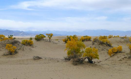 """""""人类最后的净土"""",藏羚羊的故乡,光听名字就很美"""