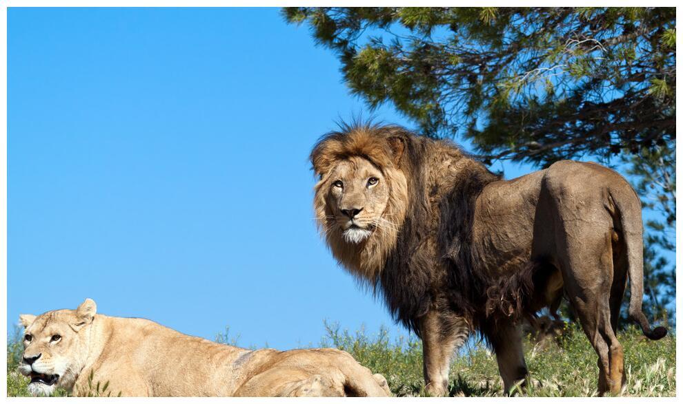 好莱坞高分电影《狮子王》里透露出的育儿真理,你看懂了几个?