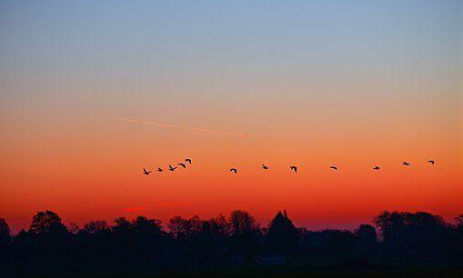 一道残阳,鸟归去