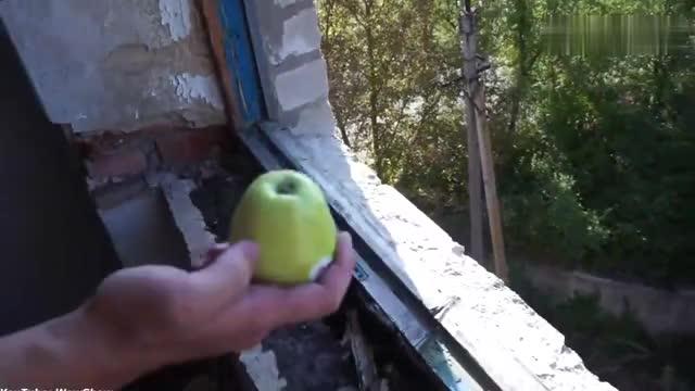 把青苹果从5楼高空抛下能完好无损吗