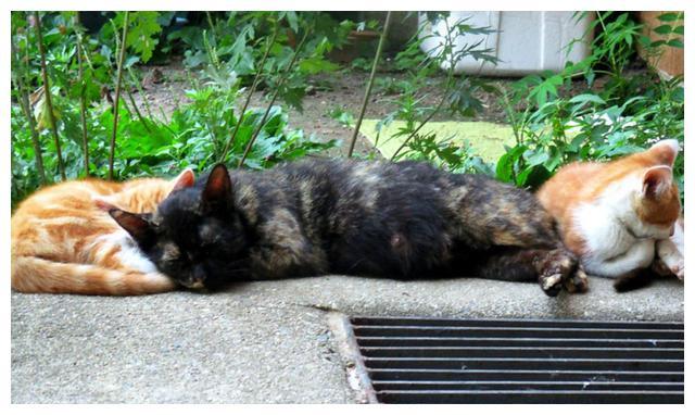 """如何知道猫咪寂寞了?若看到这5个""""信号"""",回家时多陪陪猫咪吧"""