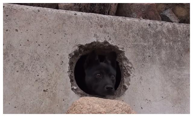 狗狗躲在排水道里,村民的善良始终感化不了它,被丢弃后不再信任