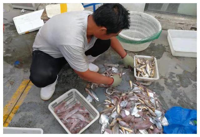 吃起来!青岛这个渔港码头海鲜鱼2块一斤