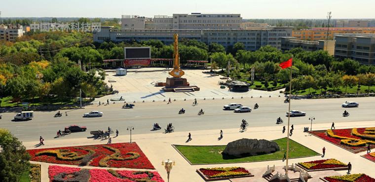 世界之最塔里木胡杨林!一县一品公益助农,新疆轮台农特产品白杏