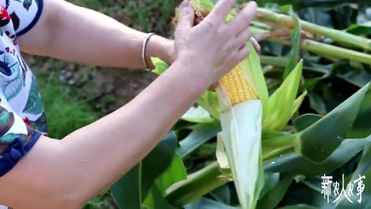 四川南充:农村外婆用玉米做美食,看外孙的表情,就知道好吃不?