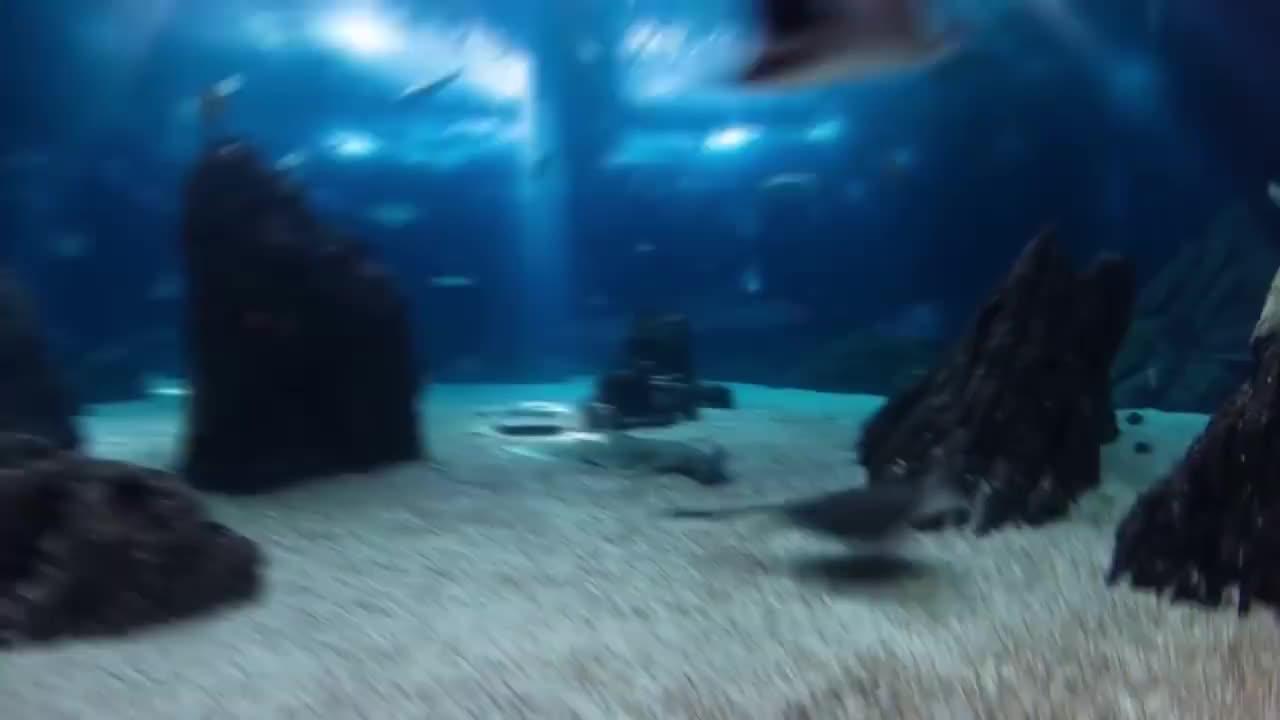 为什么全世界的海洋馆都没有饲养大白鲨呢看完莫名的心疼