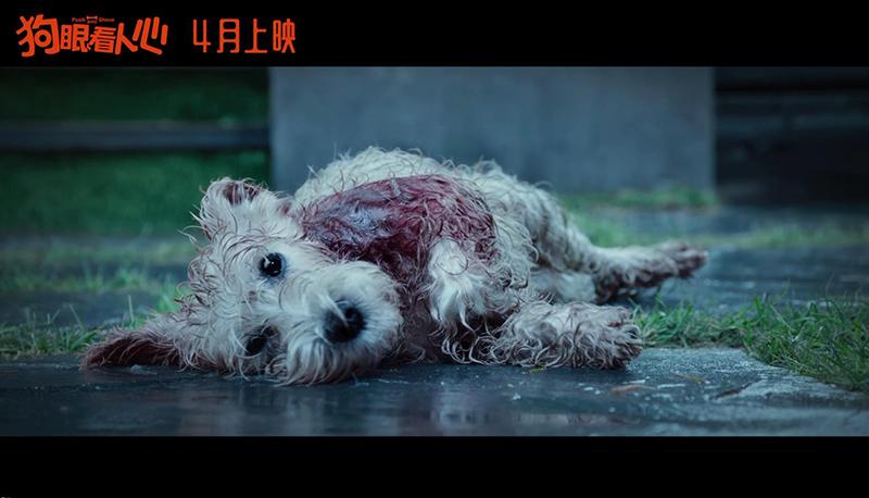 被《狗眼看人心》的预告感动哭!原来里面也有黄磊的故事.