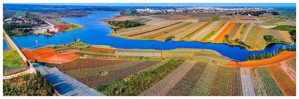 """99%广东人不知道的最美田园:菠萝的海,被誉为""""北海道的花田"""""""