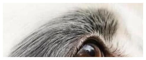 心理学:图中哪一个才是狗的眼睛?测出你这辈子会爱上几个人