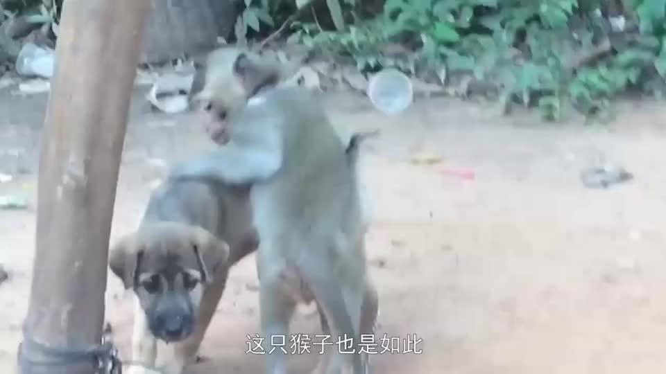 松鼠正在偷吃果子,旁观的猴子不淡定了,跑来一直捣乱