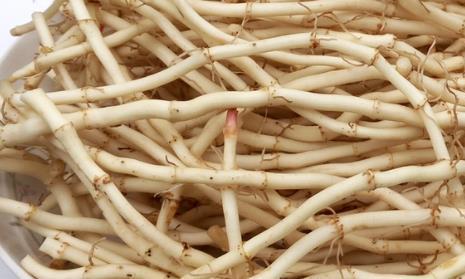 难以下咽的鱼腥草,却有很大的营养价值,你知道怎么种植它吗?