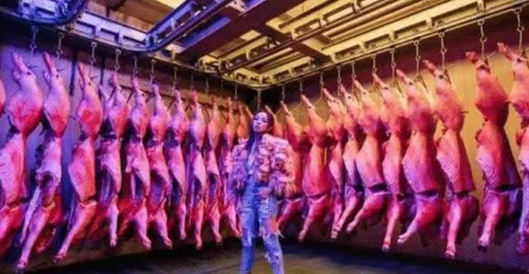 """有一种""""富婆""""叫邓紫棋!拍MV一口气买几十头猪!"""