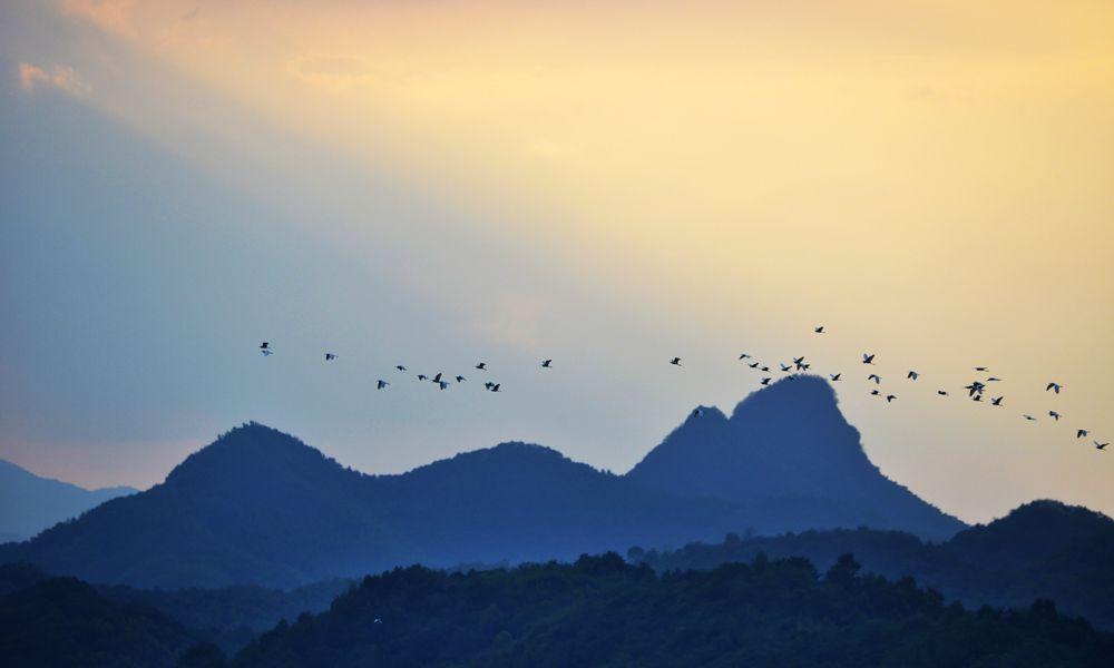 珍稀鸟类在大别山上飞翔如诗如画,摄影师抓拍美图登上人民日报