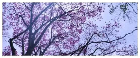 """李子柒自制""""纯露"""",意境超美,鞋却成亮点,网友:可惜了那些花"""