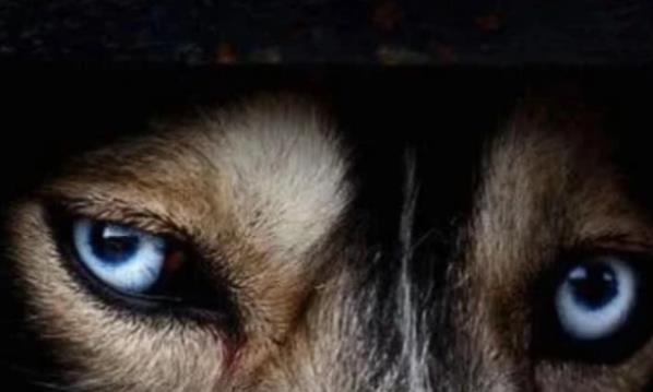 心理学:三双眼睛,你认为哪双更像是狗眼?测有多少人暗恋你!