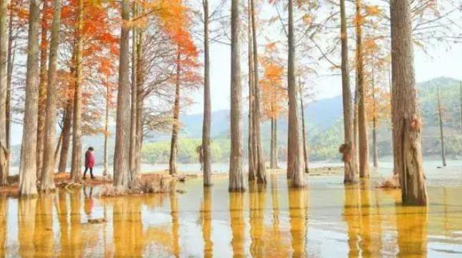 宁波深秋里的四明山,色彩斑斓,宛若大自然打翻了调色板