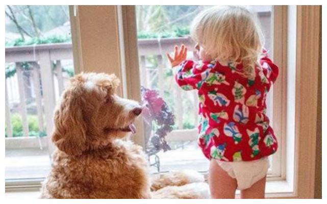 三岁孤儿和流浪狗被领养后,萌化了整个世界,谢谢你的出现!