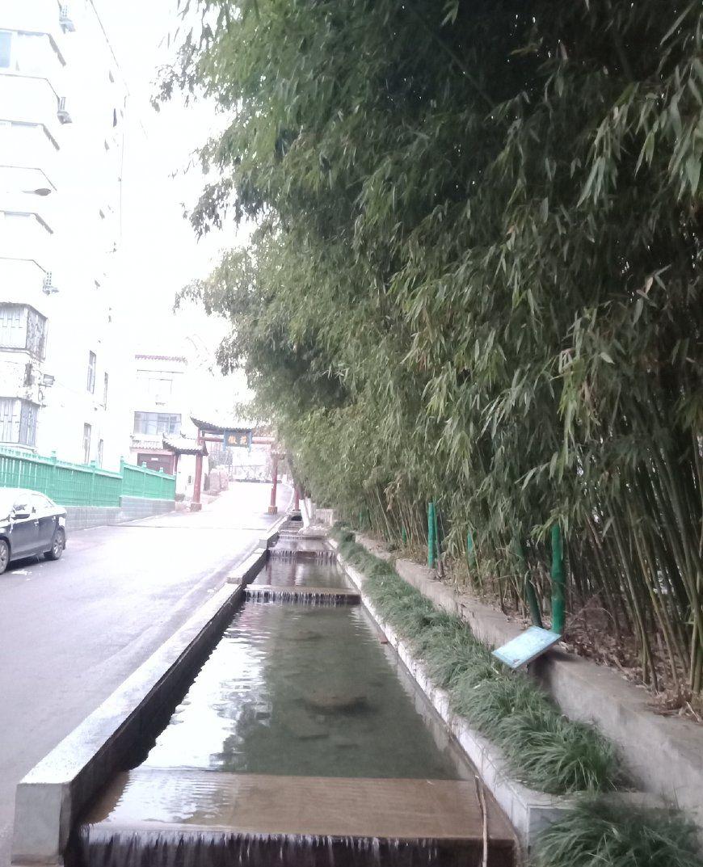 初经风雪,绿竹美景一角