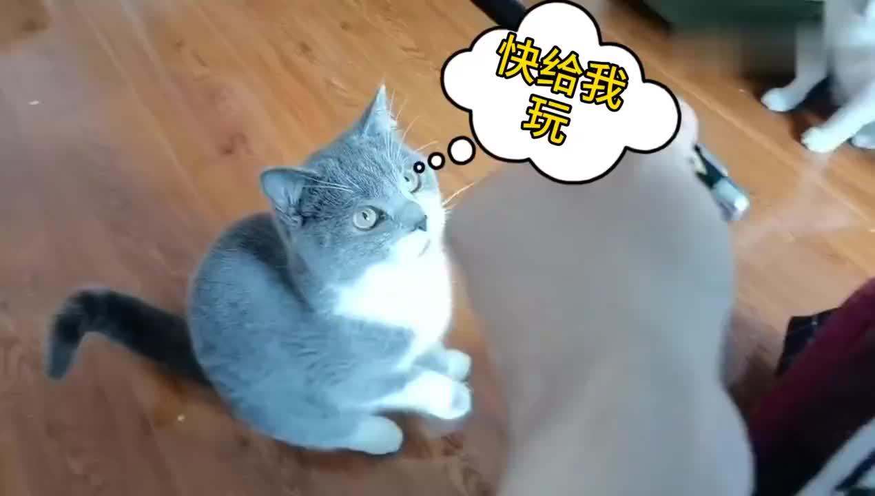 主人想抱猫被猫咪无情拒绝猫铲屎官坏的很不陪玩就想抱