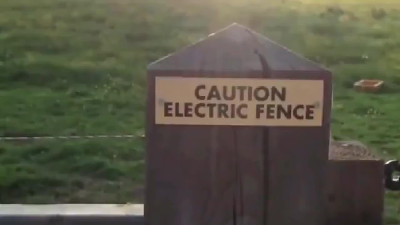小羊排队舔电网猫咪跟风尝试下一秒请憋住别笑