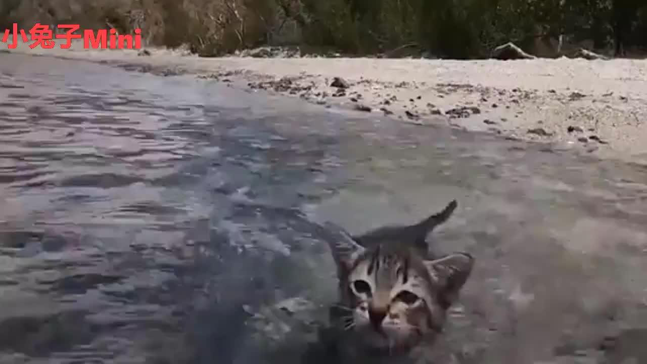 猫咪看见主人在游泳自己也跟着跳下去下秒你们别笑