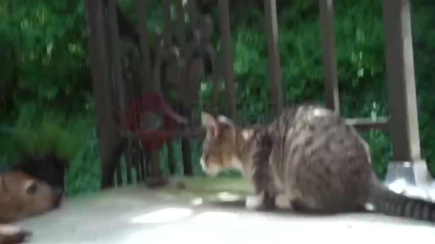 小鹿无精打采猫咪主动找它玩耍被无视了