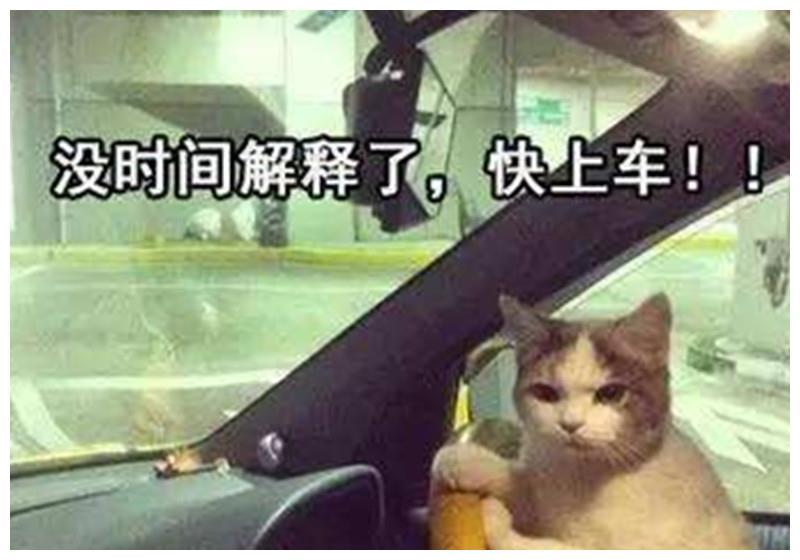 新手想成为稳妥老司机?交警:做到这些给你发小红花!