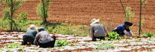 农村夏天去地里干活,怎么防止蚊虫叮咬?