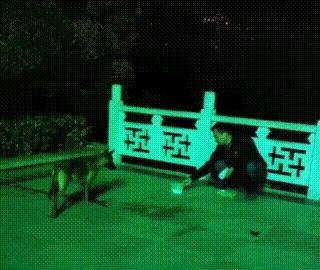 马犬与主人走失,原地哀嚎一整天,被送到警局后竟乐不思蜀