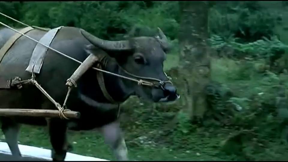 落叶归根:赵本山拉着车,和牛车较劲,看着太搞笑了
