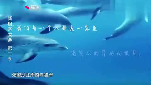 新相亲大会鲸豚驯养师为海豚放弃高薪工作感动全场