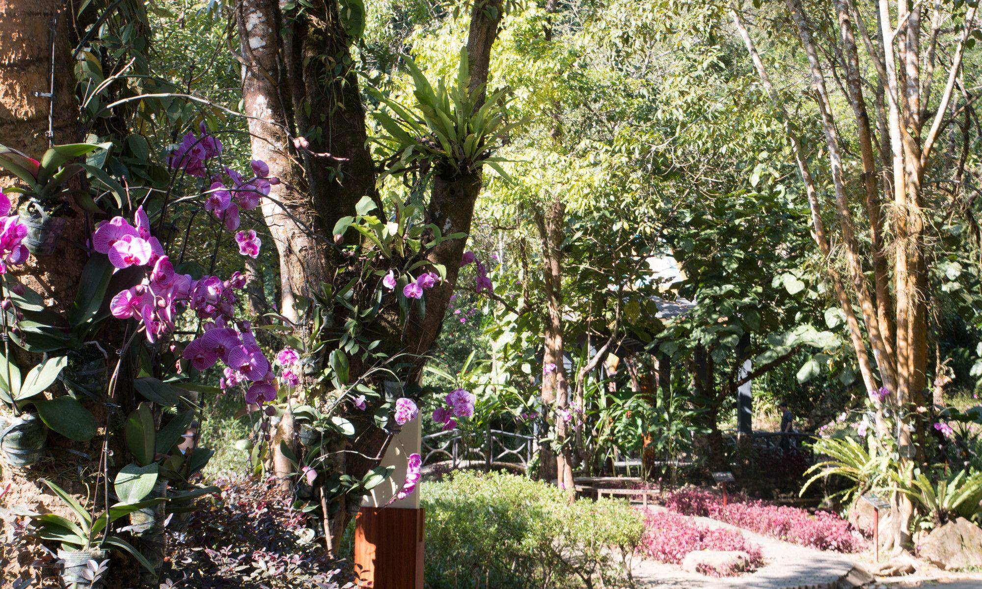 瑞丽莫里热带雨林景区,走进原始森林,看高山流水!