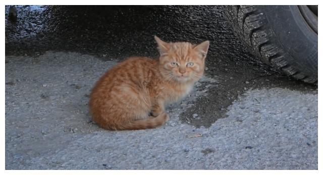 小猫躲着大猫来偷食,女子有心收养却抓不住,1周后它主动送上门