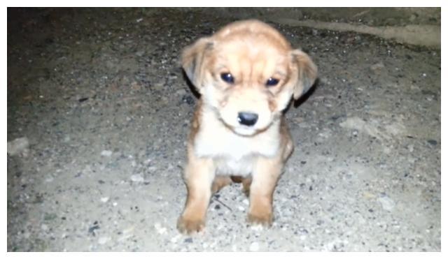 小狗被妈妈抛弃,路过大叔下车喂食,它宁愿放弃吃饱也要跟着大叔