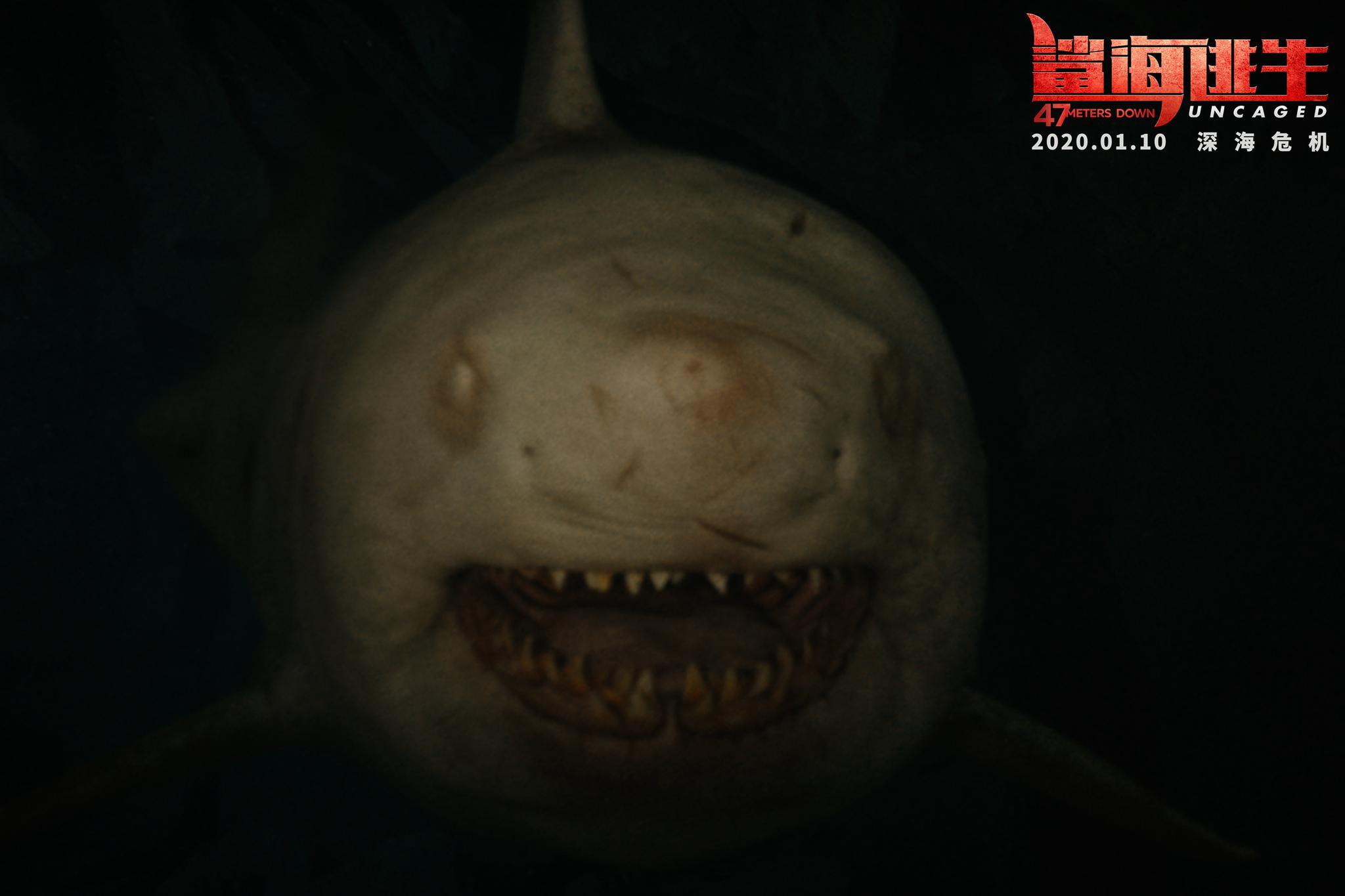 《鲨海逃生》今日震撼上映  四大看点精彩纷呈刺激到爆