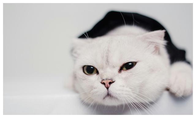 """如果猫咪成为了""""第三者"""",任你天姿国色,你也争不过它们"""