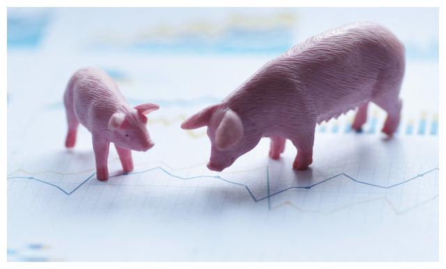 2019年10月21日生猪价格行情 猪价上涨新势头来临