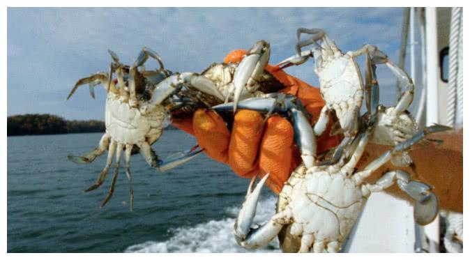 """实拍古巴大批螃蟹""""攻陷""""城市,现在正需要吃货们帮忙"""