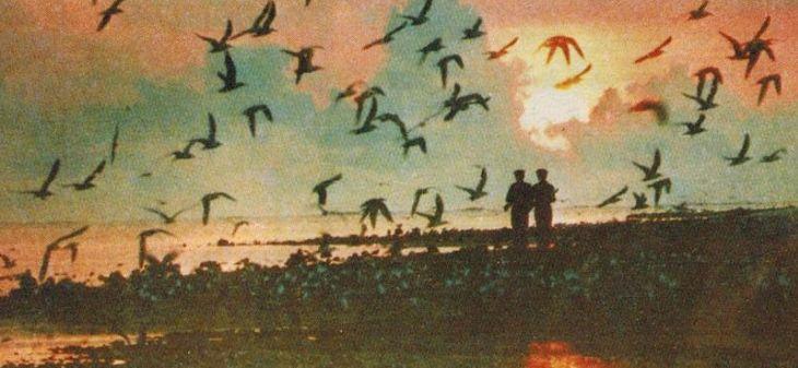 80年代台风刮过后的西沙中建岛 苦中作乐为国戍边的海军战士