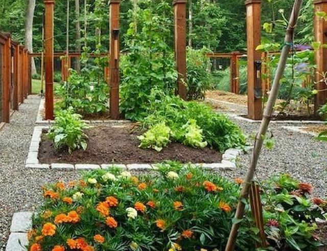 家庭 菜園