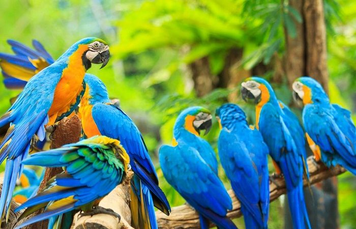 这是新加坡最大的飞禽公园,是一个名副其实的鸟类天堂