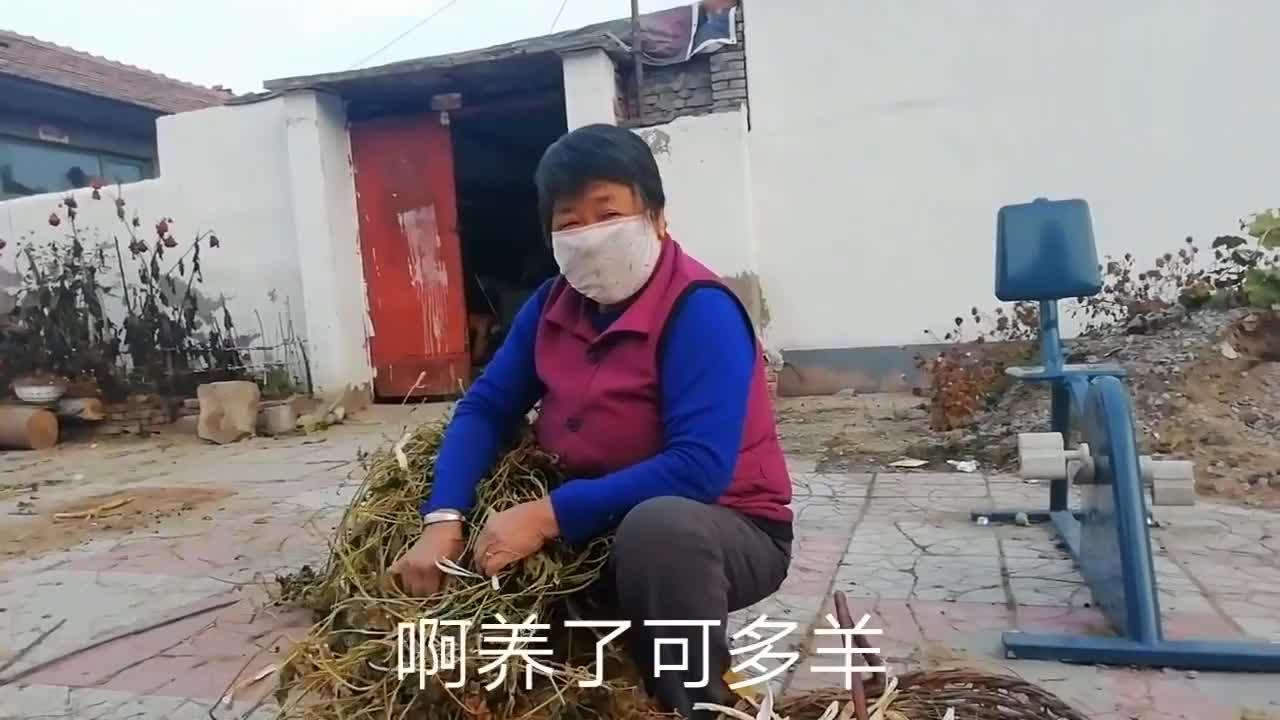 张家口这个村的农作物为何如此多灾遭遇春天霜冻夏天冰雹打