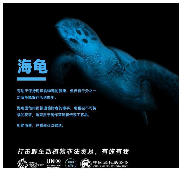 200303 联合国环境署亲善大使王俊凯上线 一起保护海龟爱护生命