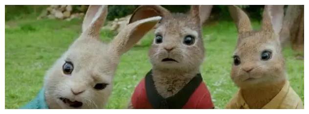 新西兰野兔泛滥!中国吃货:兔兔那么可爱,麻烦烤的时候放点椒盐