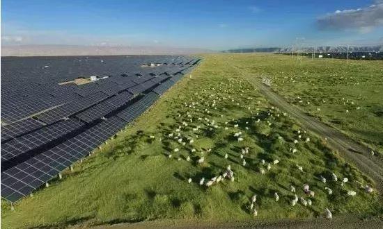德国游客:看不懂中国,发电站像羊群养殖场,这是啥奇葩操作?
