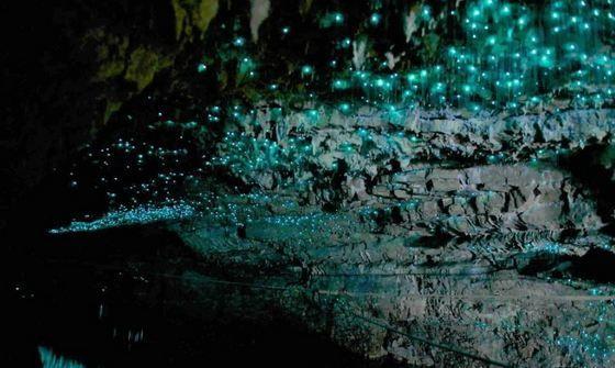 """灿若繁星的新西兰萤火虫洞,走,带你去山洞看""""银河""""!"""