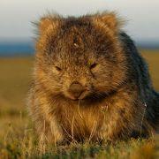 袋熊失乐园