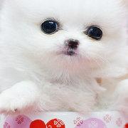 我爱宠物天王