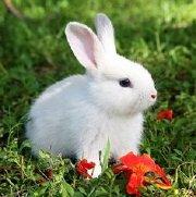 兔女郎微落
