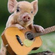 飞翔的小猪万岁